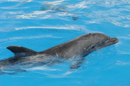Son cuatro delfines con casa en Delfinario Sonora