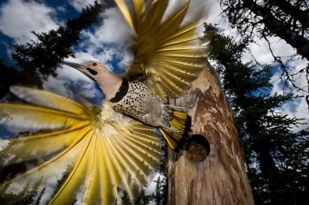 ФОТО ДНЯ: В лесу на Аляске