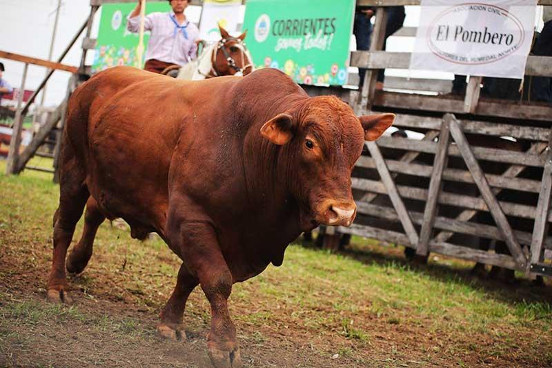 Gobierno de Corrientes pone en marcha los Remates Ganaderos