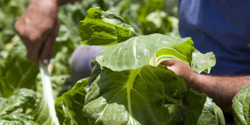 Capacitación virtual de Buenas Prácticas Agrícolas en frutas y hortalizas