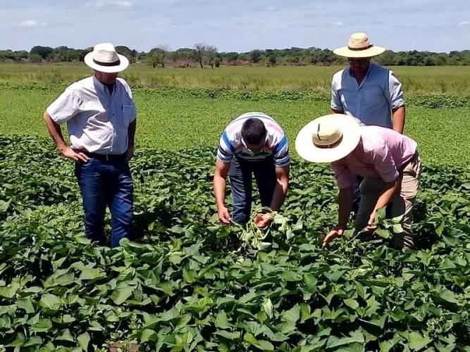 Misión técnica a Santa Fe sobre la producción de batata