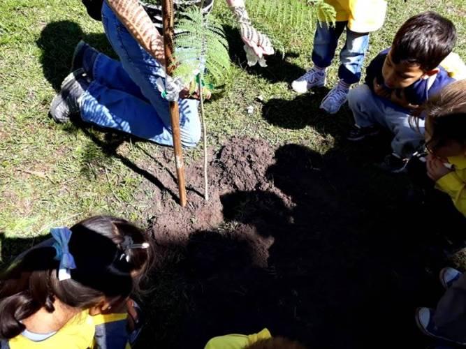 Programa Arbolado Urbano en Corrientes