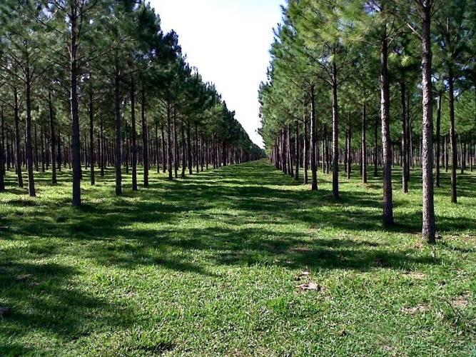 Aportes no reintegrables para forestación