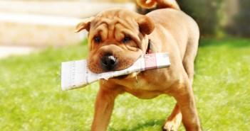 Jak naučit psa základním povelům