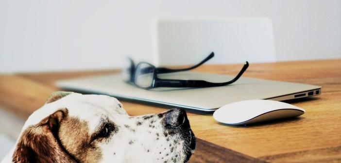 Čteme psům a psi nám naslouchají
