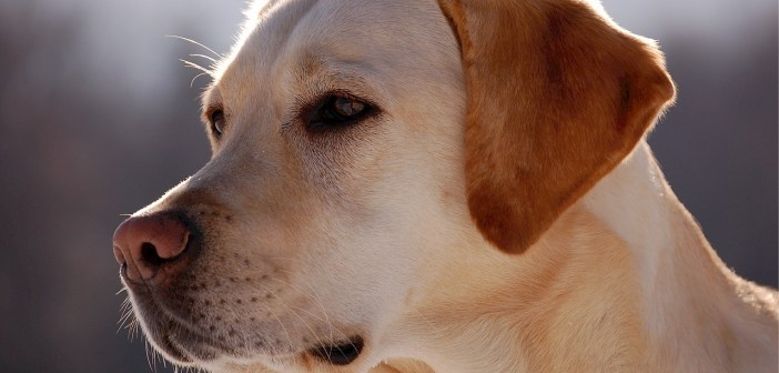 Povolen jen lovecký pes