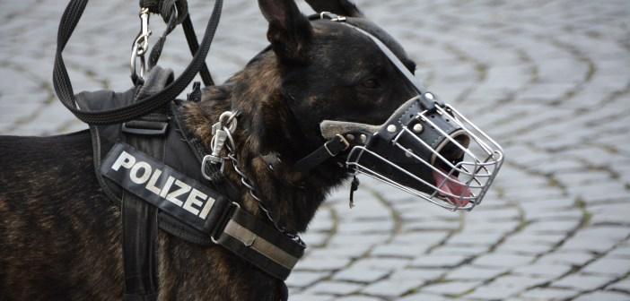 Vycvičený policejní pes
