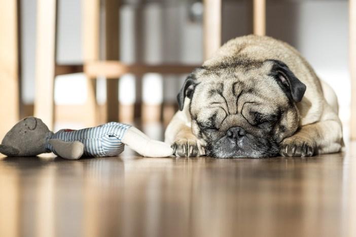 Nakrývání hraček nebo koberečků