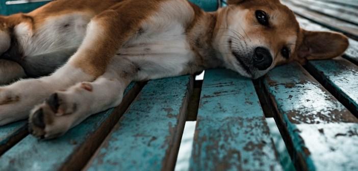 Mnoho psů nezná pojmy jako venčení, pelíšek, čistá voda...