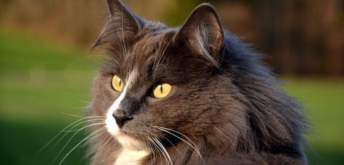 Temperament kočky jako kritérium výběru