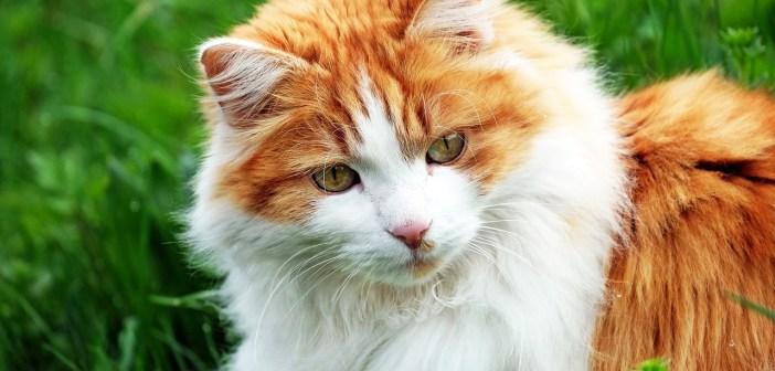 Nežádoucí chování u koček