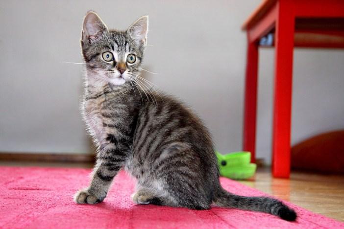 Kočka a značkování