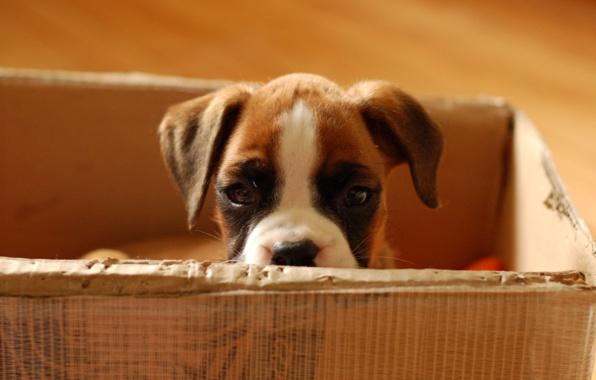 Hry s papírovou krabicí se budou líbit vašemu psovi i vám