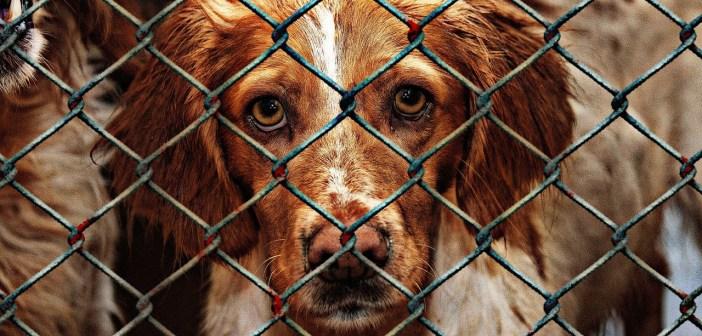 Na co asi čekají psi v klecích a za drátěnými ploty