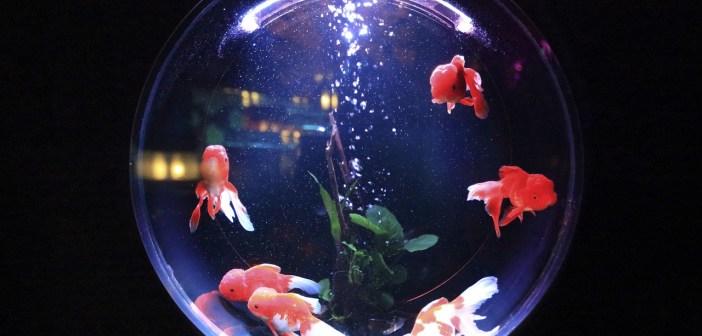 užitečné druhy rybiček
