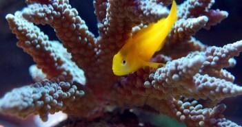 nenáročné akvarijní rybičky