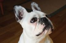 Proti čemu je nutné psa očkovat?