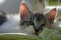 Proti čemu můžu očkovat svou kočku?