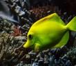 3 tipy pro začínající chovatele rybiček