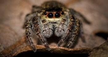 deset dech beroucích faktů o pavoucích