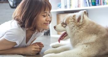 jak se můžete od psa nakazit