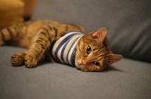 jaká je prevence proti kočičím nemocem