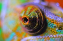 nejčastější nemoci chameleonu