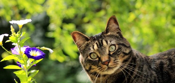 proč je jaro pro kočky synonymem útulku