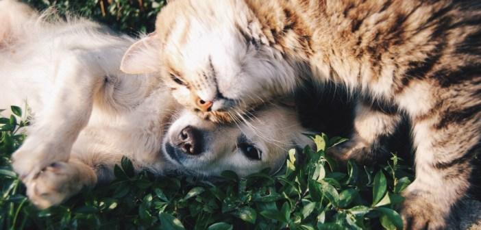 proč se vyplatí otestovat DNA koček, psů