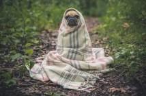 tři psí nemoci přenosné na člověka