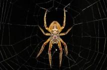 Bojíte se pavouků? Chovejte ho doma