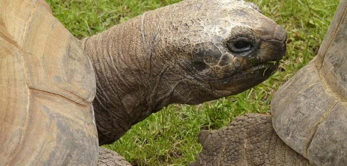 Chováte suchozemskou želvu