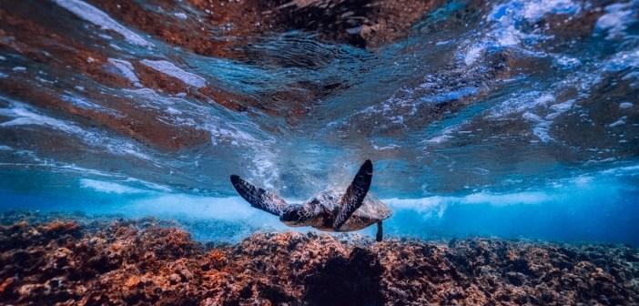 Jak krmit vodní želvu a na co si dát pozor