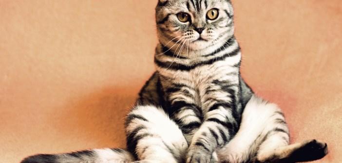 Jak se starat o kočku v březí