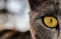Tři věci, které dohání kočku ke stresu