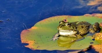čtyři žabí zajímavosti