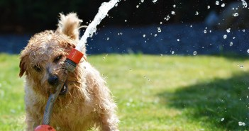 i pes během horka trpí