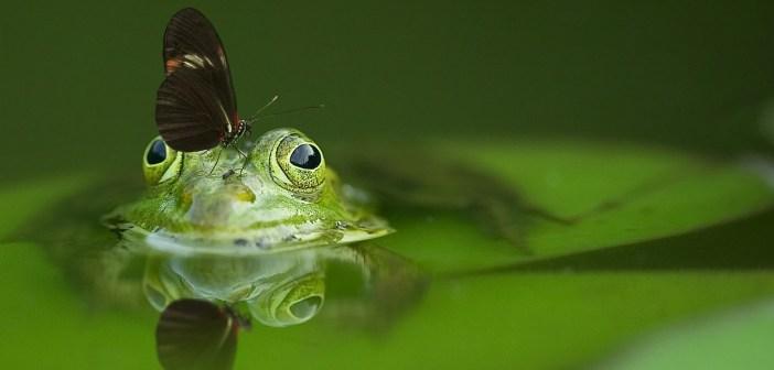 jak by mělo vypadat terárium pro žáby