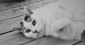 jak se nachystat na kočičího mazlíčka