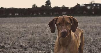 jaké jsou nejčastější genetické vady psa