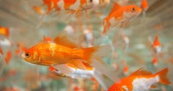 tři zajímavé otázky týkající se akvaristiky