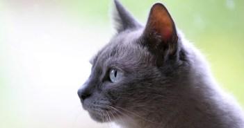 Co se o kočkách povídá a není pravda