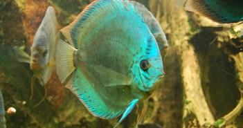 Jak se poprat s hnědým zákalem v akváriu