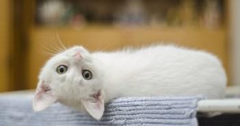 Kočka znamená v každé zemi něco jiného. Víte, co?