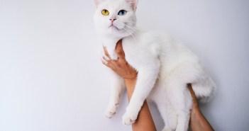 Největším kočičím trapičem jsou roztoči v uších. Víte, jak je poznáte?