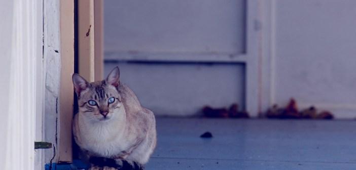 S jakými zdravotními problémy se kočky nejčastěji potýkají?
