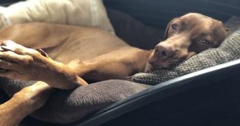 Upečte psovi sušenky, díky nimž mu nebude při cestování špatně