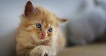Anorexie u koček. Jak se diagnostikuje a léčí?