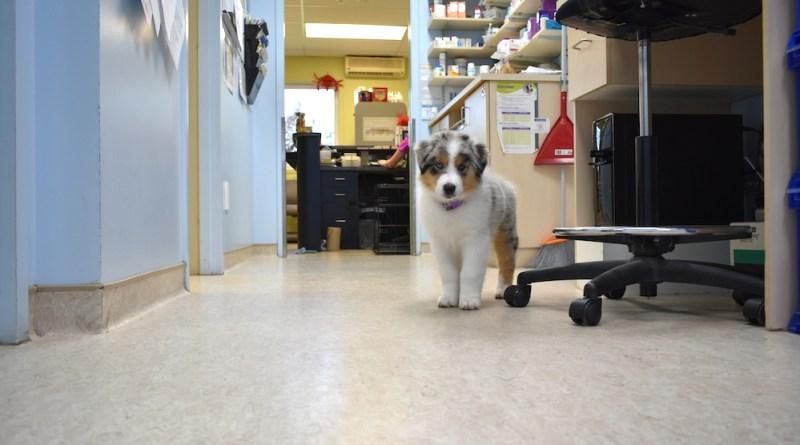clinique_veterinaire_pr2