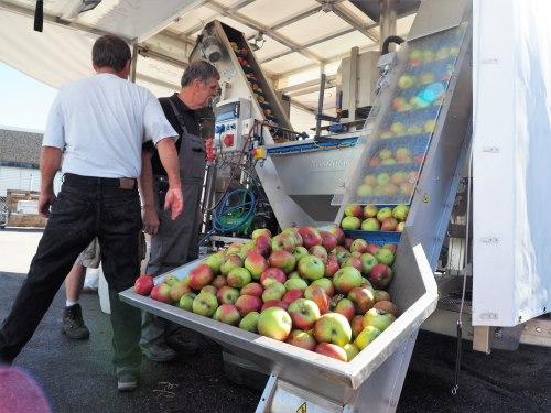 Apfelsaft aus eigenen Äpfeln